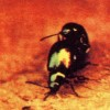 "Paul McCartney's ""Ram"" Album Included A Photo Of Two Beetles Mating"
