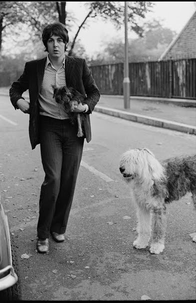 Martha My Dear Paul McCartney Dog Cavendish