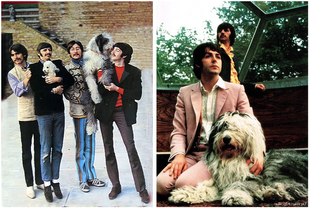 Paul McCartney's Dog Martha The Beatles