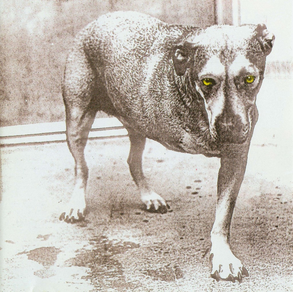 Alice In Chains Tripod Three Legged Dog Album Cover