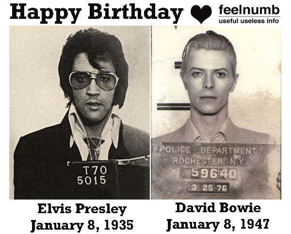 Elvis Presley David Bowie Mugshot Birthday